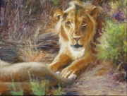 The Young Lion
